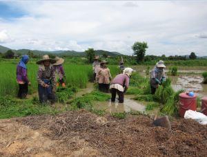 Farmers_Thailand