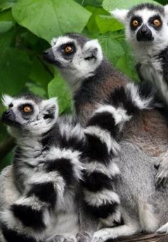 Madagascar Cycle Tour