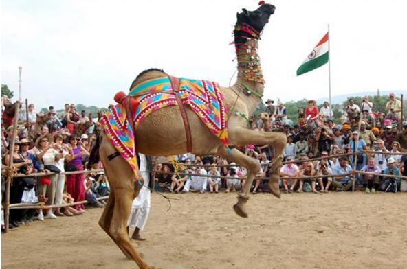 Puskar Fair