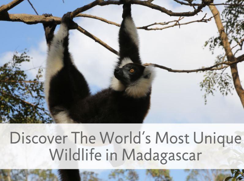 Madagascar555