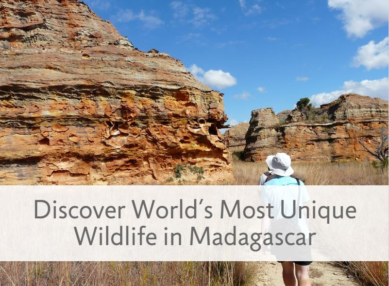 Discover World's Most Unique Wildlife in Madagascar
