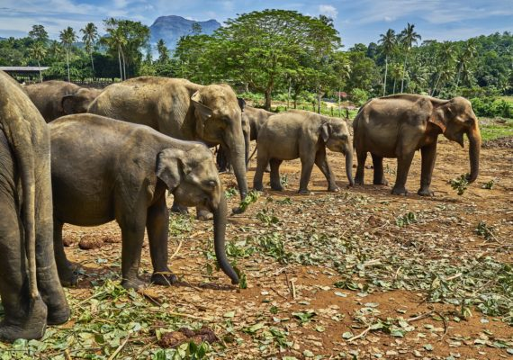 The Common Tourist Attraction You Should Avoid When Visiting Thailand