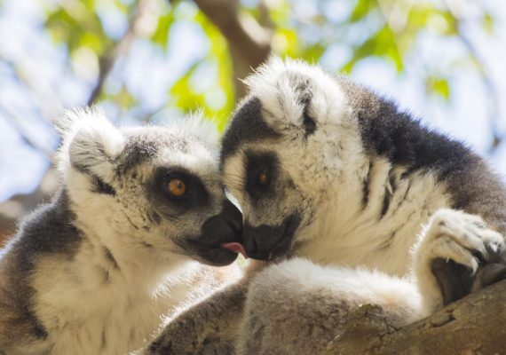 Experience Madagascar on Two Feet and Two Wheels